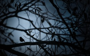 Picture night, tree, bird