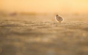 Picture light, fog, bird