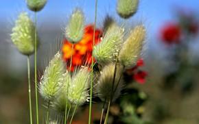 Picture field, flowers, plants, stem, meadow