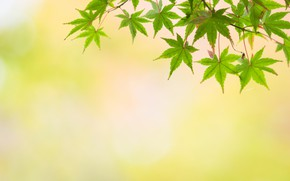 Wallpaper nature, background, leaves, macro, Tree