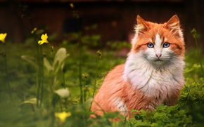 Picture cat, flower, grass, cat, red, looks
