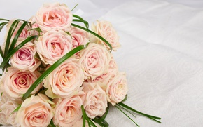 Wallpaper bouquet, roses, roses, flowers, pink