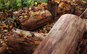 Wallpaper autumn, 2017, stump, tree