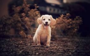 Picture nature, puppy, doggie