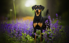 Picture flowers, dog, bokeh, Tinkerbell