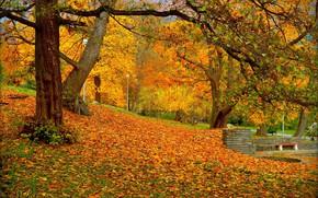 Picture Autumn, Park, Fall, Foliage, Park, Autumn, Colors, Falling leaves, Leaves