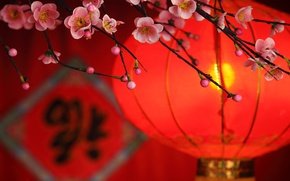 Picture flowers, branch, petals, flashlight, China