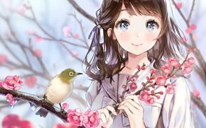 Picture look, anime, Sakura, girl, bird, white-eyed
