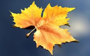 Wallpaper rendering, sheet, autumn, nature