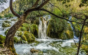 Picture greens, forest, trees, waterfall, moss, Croatia, Plitvice Lakes National Park