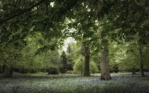 Wallpaper trees, Park, chestnut