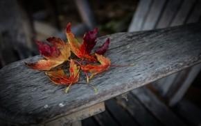 Picture color, autumn, leaves