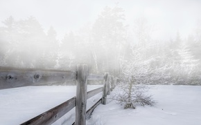 Picture winter, snow, fog, the fence