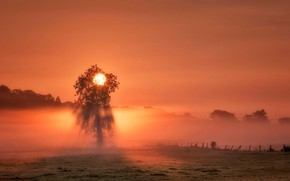Picture sunset, fog, tree, England, The sun