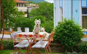 Picture Trees, Dogs, Yard, Trees, The West highland white Terrier, Dods