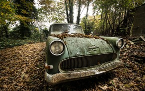 Picture machine, leaves, scrap
