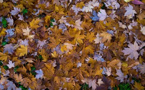 Picture leaves, autumn leaves, Autumnal Leaves
