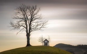 Picture the sky, tree, chapel