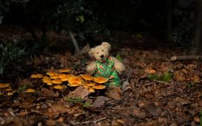 Picture autumn, forest, the dark background, mood, foliage, toy, mushrooms, bear, bear, bear, Teddy, toy, mushrooms, …