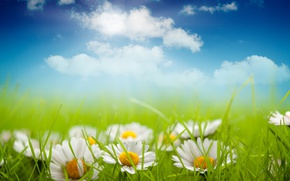 Picture grass, clouds, chamomile, meadow