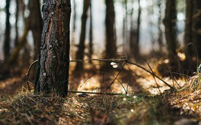 Picture forest, light, trees, nature, bokeh