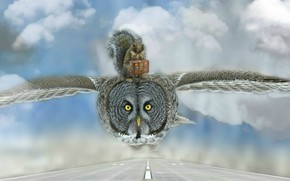 Wallpaper clouds, bird, photoshop, suitcase, journey, protein, rodent, road, owl, flight