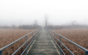 Picture winter, bridge, fog
