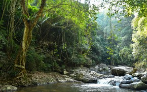 Picture greens, forest, trees, branches, tropics, stream, stones, foliage, jungle, Thailand, Pala-U Waterfall