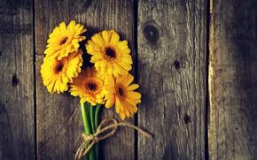 Picture flowers, Board, yellow, gerbera