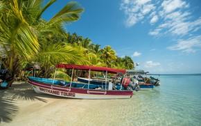Picture sand, sea, beach, the sky, the sun, clouds, tropics, palm trees, shore, island, horizon, Panama, …