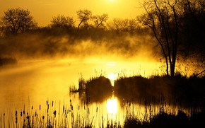 Picture grass, the sun, trees, fog, morning, Swamp