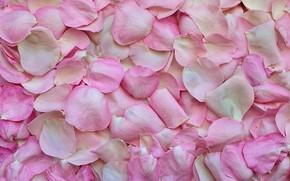 Picture flowers, roses, petals, Texture