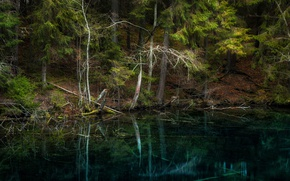 Picture forest, trees, lake, reflection, Finland, Finland, Hollola