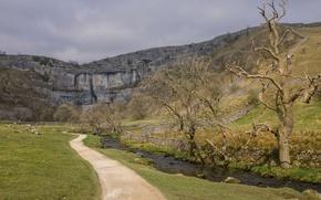 Picture nature, rock, river, stream, tree