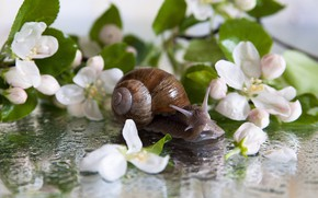 Picture leaves, flowers, snail
