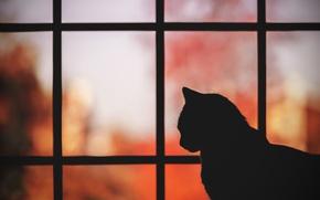 Wallpaper cat, cat, background, silhouette, profile