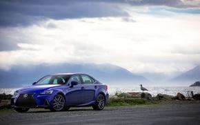 Picture sea, the sky, Lexus, car, Blue, Lexus, SPORT, Metallic, IS 200t F