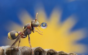 Picture macro, drop, flag, insect, ant