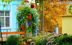 Picture Flowers, Autumn, Flowers, Plants, Nature, Fall, Flowers, Autumn, Yard, Pots