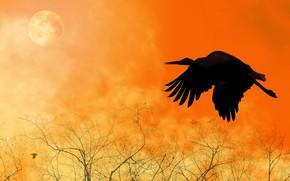 Wallpaper bird, silhouette, flight, wings, collage