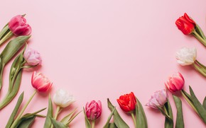 Picture flowers, colorful, tulips, pink, white, white, fresh, wood, pink, flowers, beautiful, tulips, spring, purple, tender