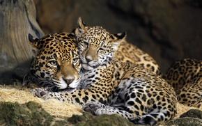 Wallpaper child, USA, mother, Jaguars, Milwaukee County Zoo