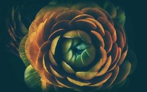 Picture flower, macro, Bud, mid