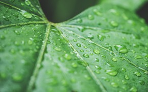 Picture drops, sheet, green, rain