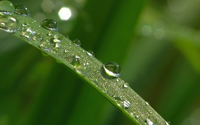 Wallpaper Macro, Drops, Rosa, Morning, Green, a blade of grass, Morning, Macro, Leaves, Drops