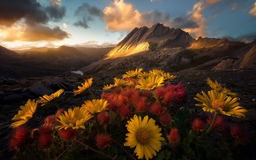 Picture flowers, mountains, morning