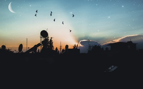 Picture city, landscape, nature, bird, sunset, night, land, beatiful