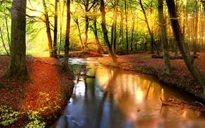 Wallpaper stream, forest, autumn, trees, the sun