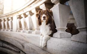 Picture bridge, dog, bokeh, Kaylee