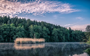 Picture forest, the sky, lake